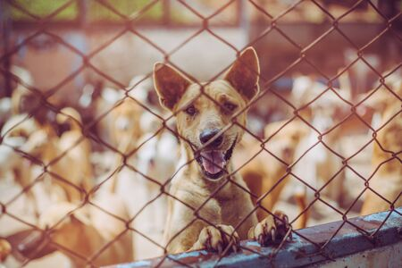 Close up a stray dog, alone life waiting for food. Abandoned homeless stray dog is lying in the foundation. Little sad abandoned dog in cage. Stok Fotoğraf