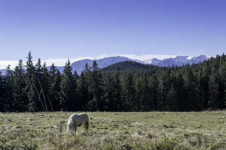 small horse on a field in the mountains photo