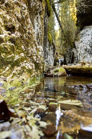 hardwoods: mountain creek in autumn, Apuseni, Romania