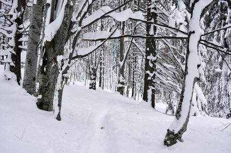 snow forest: Winter landscape in the mountains with snow covered forest and blue cloudy sky Stock Photo