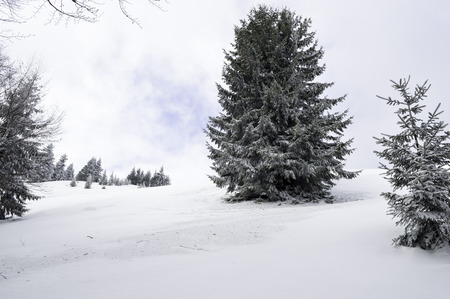 snow covered forest: Winter landscape in the mountains with snow covered forest and blue cloudy sky Stock Photo