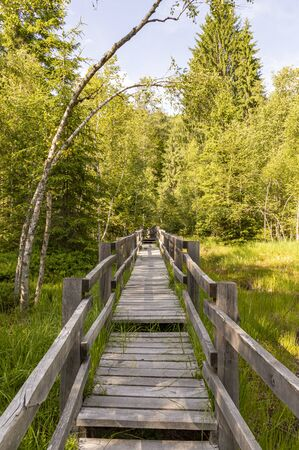 wooden footbridge through the swamp with bubbling lakes