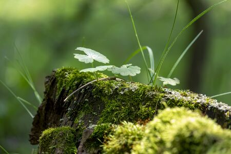 Stump from tree in the forest covered by moss and plants Stock Photo