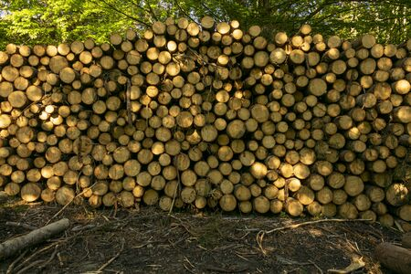pile of wood in the green forest, in the spring. Deforestation made by man 写真素材
