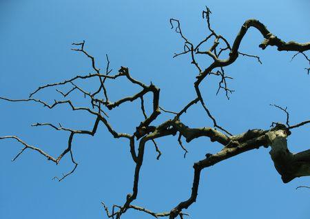 albero secco: Albero secco nel parco. Retroilluminazione Archivio Fotografico