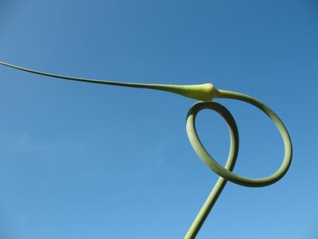 flechas curvas: Flechas curvas ajo contra el cielo azul Foto de archivo