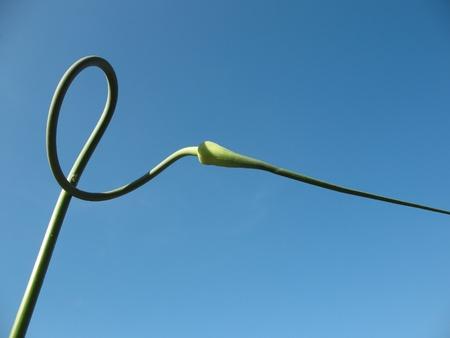 flechas curvas: Flechas de ajo curva contra el cielo azul