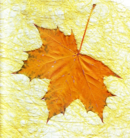 filamentous: Autumn maple leaf on yellow background