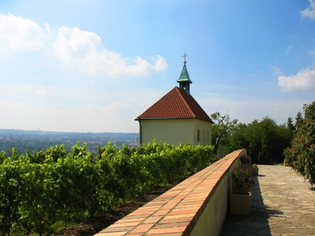 troy: Vineyard in Troy (Troja) in the north of Prague Stock Photo