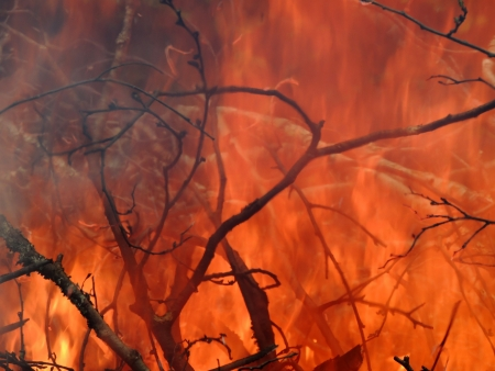 pyre: Background of the branches in the burning pyre Stock Photo