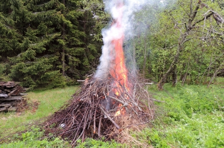 marge: Bonfire on the forest  edge  Stock Photo