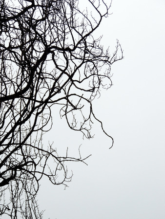 wizened: Tree branches against the sky. Backlight Stock Photo