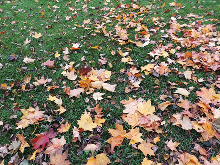 wilting: Fallen leaves on green grass Stock Photo