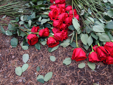 Bunch of red roses on the ground
