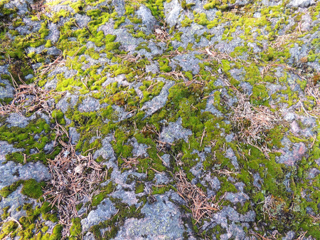 Surface of granite rock covered with moss 版權商用圖片