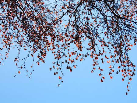 Branches of tree with red leaves against sky