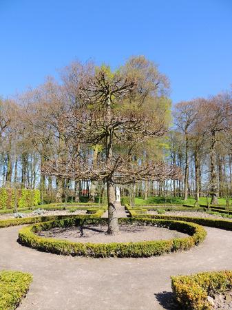 Shorn tree in spring garden, topiary art Stok Fotoğraf - 115320643