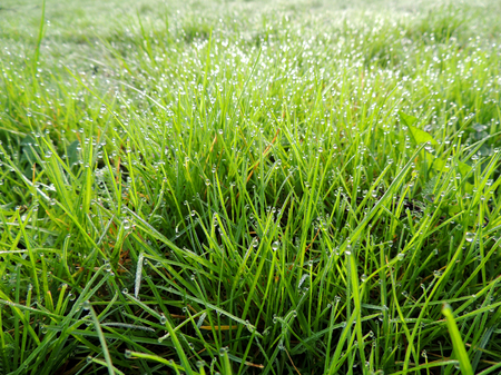 Dew on grass, lawn Stok Fotoğraf - 120323016