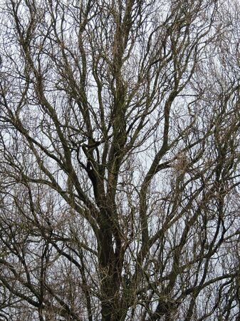 Leafless deciduous tree trunk and branches