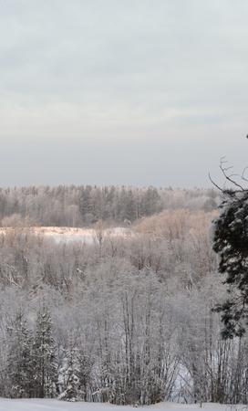 눈이 두꺼운 하얀 카펫이 나무 가지를 덮고 있습니다.