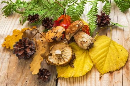 Autumn etude with mushrooms