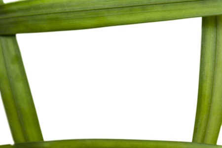 Frame of the fern leaf on white background