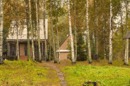 Two houses on the edge of the autumn birch forest