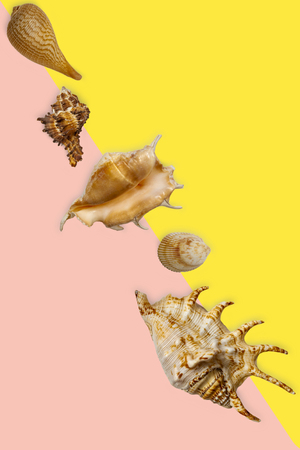 Different seashells lie diagonally on a colored background