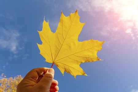 The hand holds a wedge leaf against the sky.