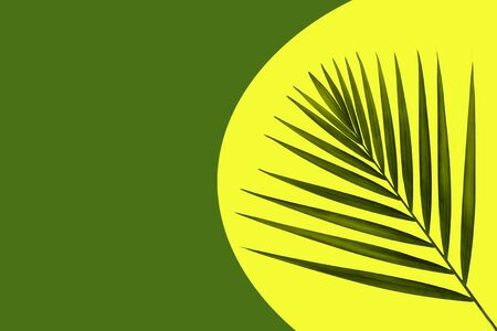 A sprig of the fern on a colored background. 写真素材