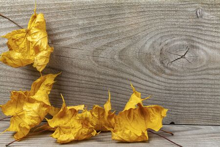 Yellow maple leaves on a wooden background 版權商用圖片