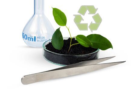 Green plant grows in the ground and in laboratory glassware. Imagens