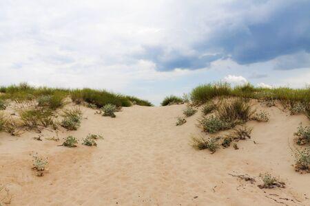 Sand dune plants against a blue sky. Banco de Imagens