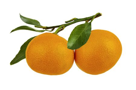 Two tangerines on a branch with leaves on a white background. Isolate