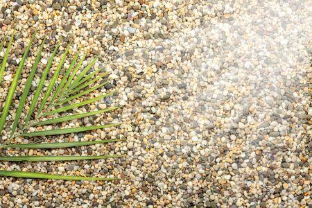 A sprig of fern lies on coarse, sea sand