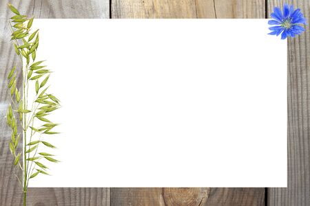 The concept of a summer card. Natural wooden background, white sheet of paper with an ear of oats and a wildflower 写真素材