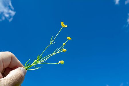 A hand holds a wild flower against a blue sky