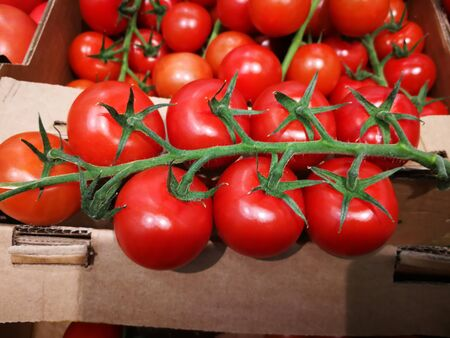 Crates Of Tomato. Packing products for export Stock Photo