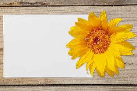 Pattern for text. A white sheet of paper with a sunflower flower on a wooden background. Reklamní fotografie