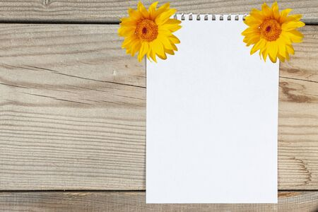 A sheet of white paper attached by sunflowers on a wooden board Zdjęcie Seryjne