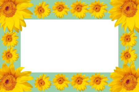 Summer pattern with sunflowers for text