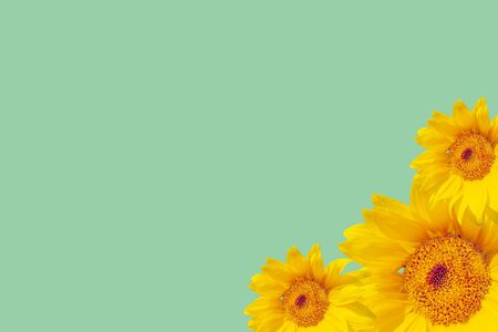 Background for the text on the summer theme with sunflowers Reklamní fotografie