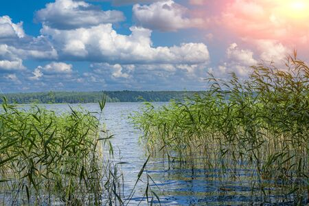 Reed on the lake against the blue sky with clouds and the sun Reklamní fotografie