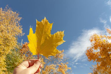 The hand holds a yellow maple leaf against the background of trees and sky