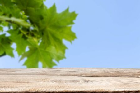 Wooden boards against the green leaves of maple and blue sky