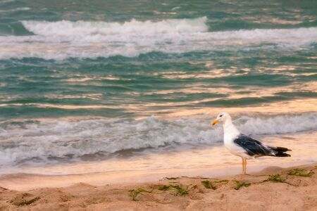 A seagull stands on the sand of a beach by the sea. Close-up Reklamní fotografie