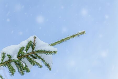 The tops of christmas trees against the blue sky with clouds