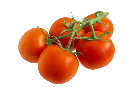 Red tomatoes hang on the branch. All on a white background 스톡 콘텐츠 - 139727371
