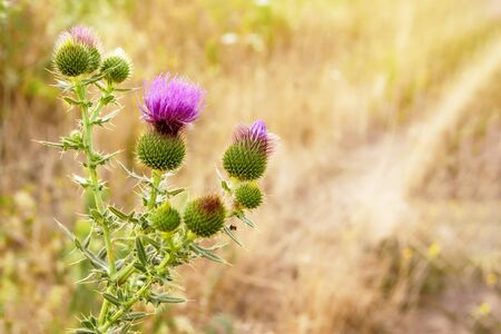 Prickly plant with vibrant purple flower.