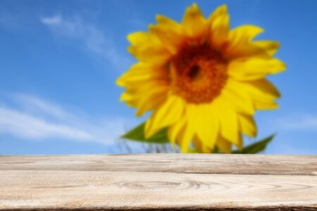 In the foreground are wooden planks in the background of sunflower and blue sky